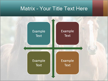 Three Beautiful Horses PowerPoint Template - Slide 37