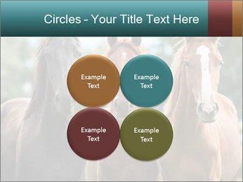 Three Beautiful Horses PowerPoint Template - Slide 38