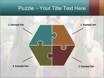 Three Beautiful Horses PowerPoint Template - Slide 40