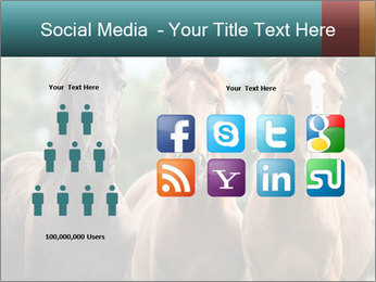 Three Beautiful Horses PowerPoint Template - Slide 5