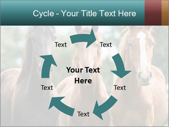 Three Beautiful Horses PowerPoint Template - Slide 62