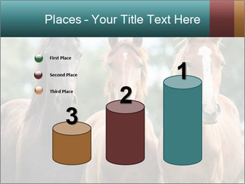Three Beautiful Horses PowerPoint Template - Slide 65