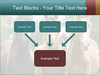 Three Beautiful Horses PowerPoint Template - Slide 70