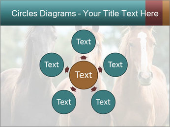 Three Beautiful Horses PowerPoint Template - Slide 78