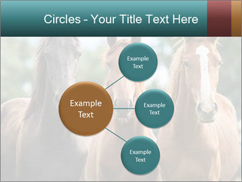 Three Beautiful Horses PowerPoint Template - Slide 79