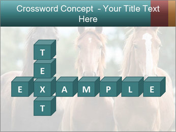 Three Beautiful Horses PowerPoint Template - Slide 82