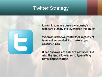 Three Beautiful Horses PowerPoint Template - Slide 9