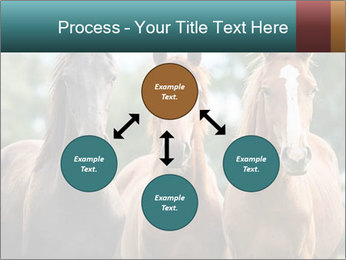 Three Beautiful Horses PowerPoint Template - Slide 91