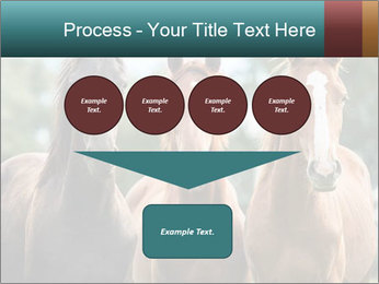 Three Beautiful Horses PowerPoint Template - Slide 93