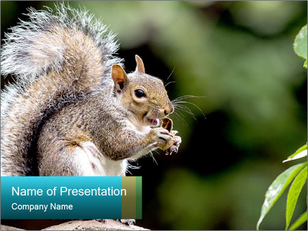 Cute Squirrel PowerPoint Templates