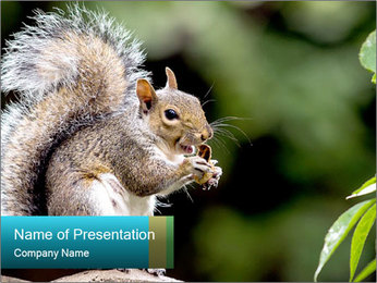 Cute Squirrel PowerPoint Template - Slide 1