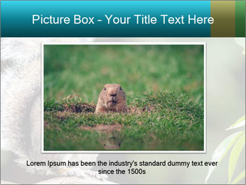 Cute Squirrel PowerPoint Template - Slide 16