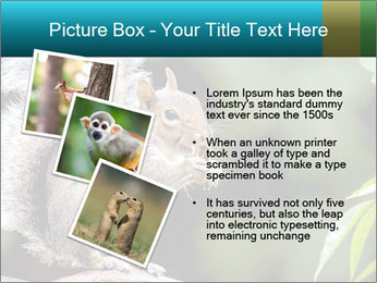 Cute Squirrel PowerPoint Template - Slide 17