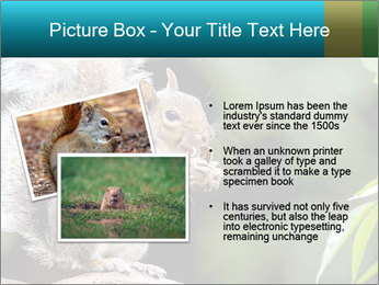 Cute Squirrel PowerPoint Template - Slide 20