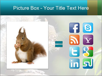 Cute Squirrel PowerPoint Template - Slide 21