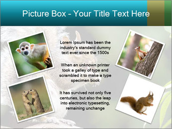 Cute Squirrel PowerPoint Template - Slide 24