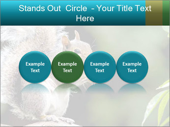 Cute Squirrel PowerPoint Templates - Slide 76