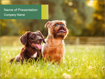 Two Dogs Friends PowerPoint Template - Slide 1