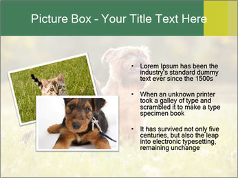 Two Dogs Friends PowerPoint Template - Slide 20