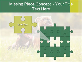 Two Dogs Friends PowerPoint Template - Slide 45