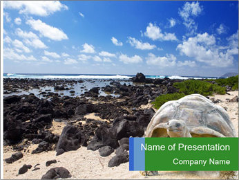 Rocks And Turtle PowerPoint Template - Slide 1