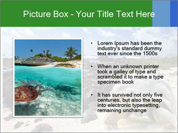 Rocks And Turtle PowerPoint Template - Slide 13