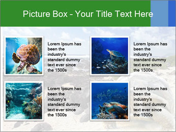 Rocks And Turtle PowerPoint Template - Slide 14