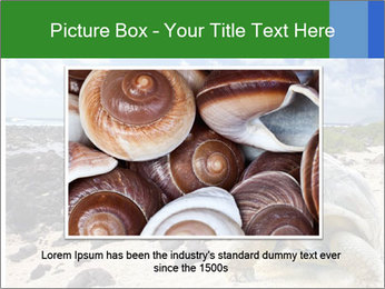 Rocks And Turtle PowerPoint Template - Slide 16