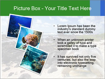 Rocks And Turtle PowerPoint Template - Slide 17