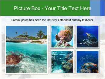 Rocks And Turtle PowerPoint Template - Slide 19