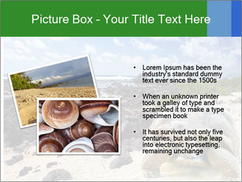 Rocks And Turtle PowerPoint Template - Slide 20