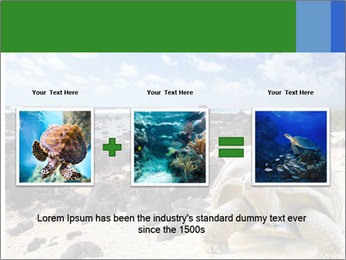 Rocks And Turtle PowerPoint Template - Slide 22