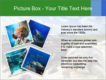 Rocks And Turtle PowerPoint Template - Slide 23