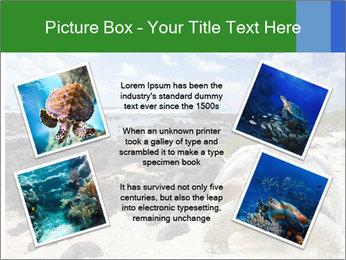 Rocks And Turtle PowerPoint Template - Slide 24
