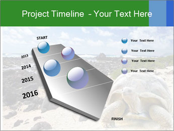 Rocks And Turtle PowerPoint Template - Slide 26