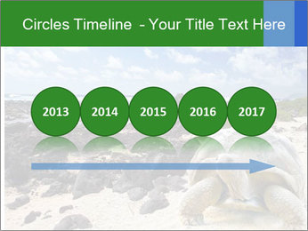 Rocks And Turtle PowerPoint Template - Slide 29