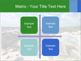 Rocks And Turtle PowerPoint Template - Slide 37
