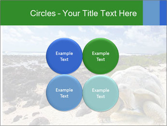 Rocks And Turtle PowerPoint Template - Slide 38