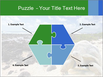 Rocks And Turtle PowerPoint Template - Slide 40