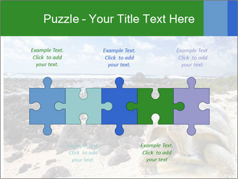 Rocks And Turtle PowerPoint Template - Slide 41