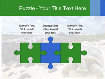 Rocks And Turtle PowerPoint Template - Slide 42