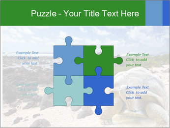 Rocks And Turtle PowerPoint Template - Slide 43