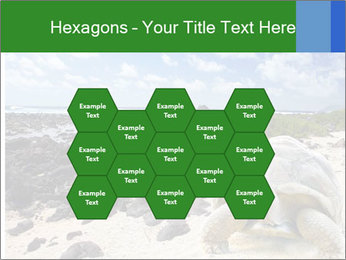 Rocks And Turtle PowerPoint Template - Slide 44