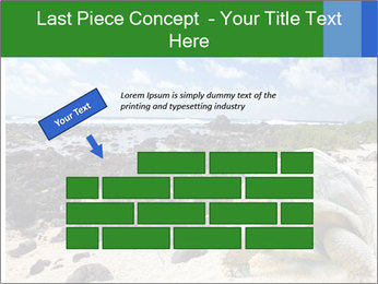 Rocks And Turtle PowerPoint Template - Slide 46