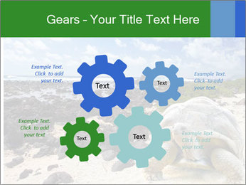 Rocks And Turtle PowerPoint Template - Slide 47