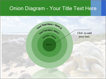 Rocks And Turtle PowerPoint Template - Slide 61
