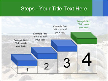 Rocks And Turtle PowerPoint Template - Slide 64