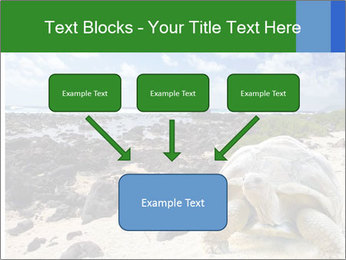 Rocks And Turtle PowerPoint Template - Slide 70