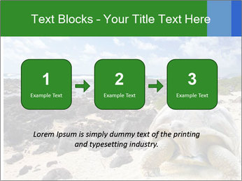 Rocks And Turtle PowerPoint Template - Slide 71