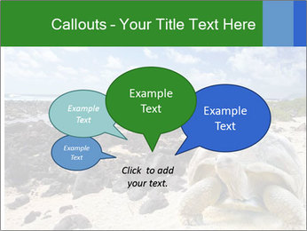 Rocks And Turtle PowerPoint Template - Slide 73